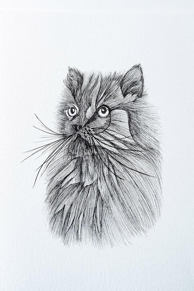 A Cat 'Tiddles' Doodling Portraits Art