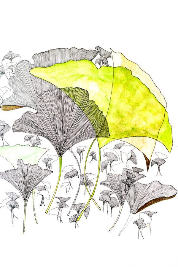 Ginkgo tree leaf drawing